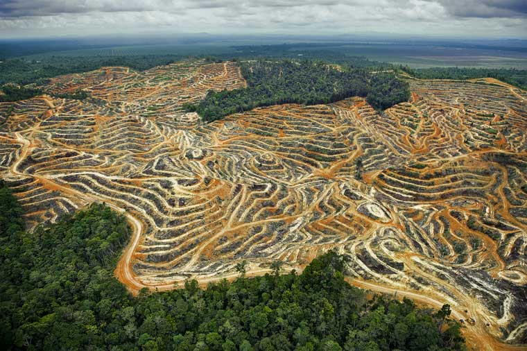 Excessive Deforestation cutting