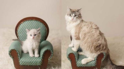 One-year-later-cat