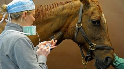 Basics-of-Horse-Antibiotics