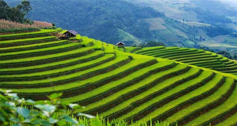 Rice-terrace-fields-bali
