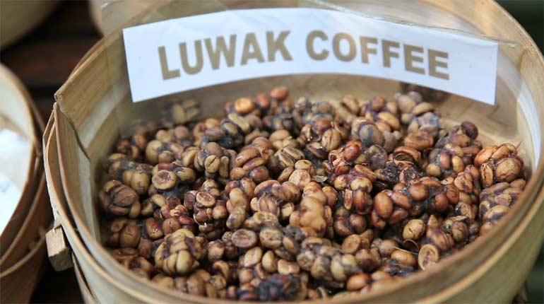 kopi-luwak-bali