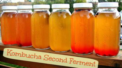 Benefits of Kombucha