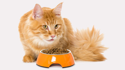 Feed-Your-Cat
