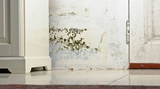 home-Mold-Inspector