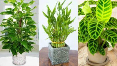 Artificial Plants Workspace