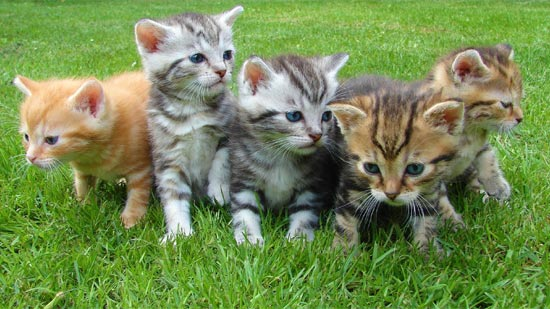 Reasons Find Right Cat Breed
