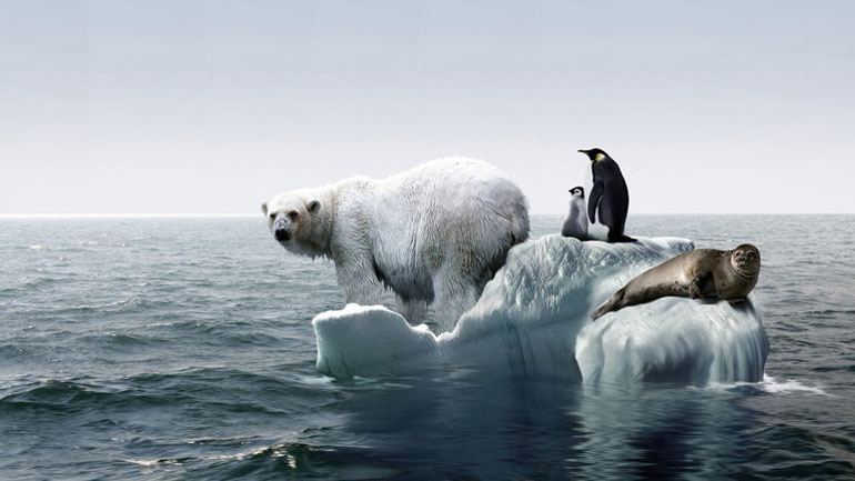 Climate Change Effects Animals
