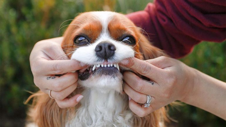 Oral Care for Canine Companion